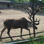 Roev Ruchey Zoo