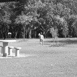 Crianças e Famílias nos gramados e áreas de Lazer