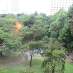 The garden near the hotel