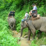 Trek with elephant