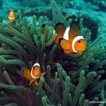 Nemo with Love Diving Phuekt