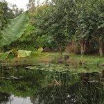 de tuin van onze garden villa