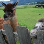 Sweet llama and pony