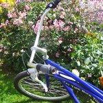 My trusty Fat Tire bike