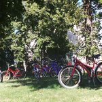 The bikes patiently waiting while we ate our picnic lunch