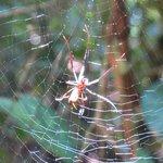 Arañas hay unas cuantas a lo largo del camino