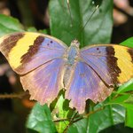 Preciosas mariposas
