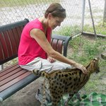 Very cool to pet the Servals!