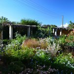 Kynthia's wildflower garden.