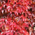 Primo rosso d'autunno