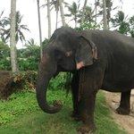 The lovely elephant
