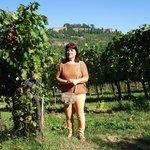 Farms. Nobile Montepulciano - The vineyard