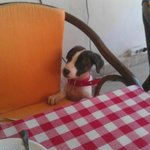 Puppy Racket lol