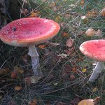 Mushrooms in forest grounds