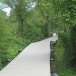 TR Island: Swamp Trail Boardwalk