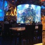 T-Rex aquário