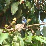 Uno de los tantos pájaros que se observan