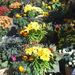 A nearby gift and flower shop/garden center is a handy stop for special-occasion gift shopping.