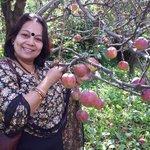 Apple orchard near hotel