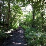 Walk to Otterspool
