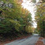 Strada del Parco per Prato Selva