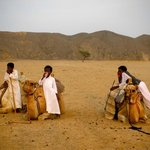 escursione deserto- cammellata