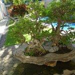 Pool /garden area
