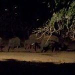 elefanti fuori dalla tenda