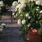 mooie bloemen in de tuin en een rustig hoekje voor romantici beschikbaar! ;-)