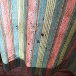 room curtain