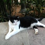 Six Toed Cat at Hemingway's
