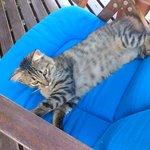 Un chat au paradis