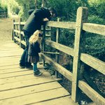 At pooh bridge
