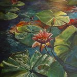 Water Lilies, Tropical Delight Series