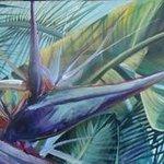 White Bird, Tropical Delight Series