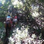 riding through the brush