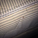 signs of bed bugs in room 306