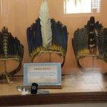 Ornamentos de cabeça, feito de penas de araras, papagaio e pavão usados pelo Xavantes