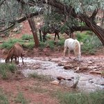 horses at a stream