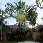 Tree in villa