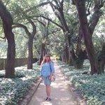 Beautiful tree lined walkways