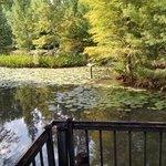 Serene ponds