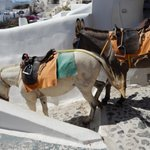 """Mules and donkeys descending the public """"street"""" to the sea."""