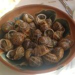 Exotic snails