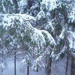 Ночью выпал снег