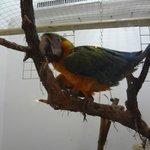 Foto di Blue Bird Cafe