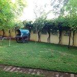 Bullock cart in lawn