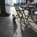 un coin de la terrasse et le chat