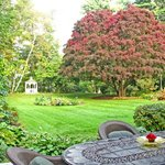Gardens and yard at breakfast time at Forty Putney Road B&B.
