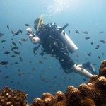 Dritter Tauchgang - Sail Rock - Thailand (c) Colin Parker